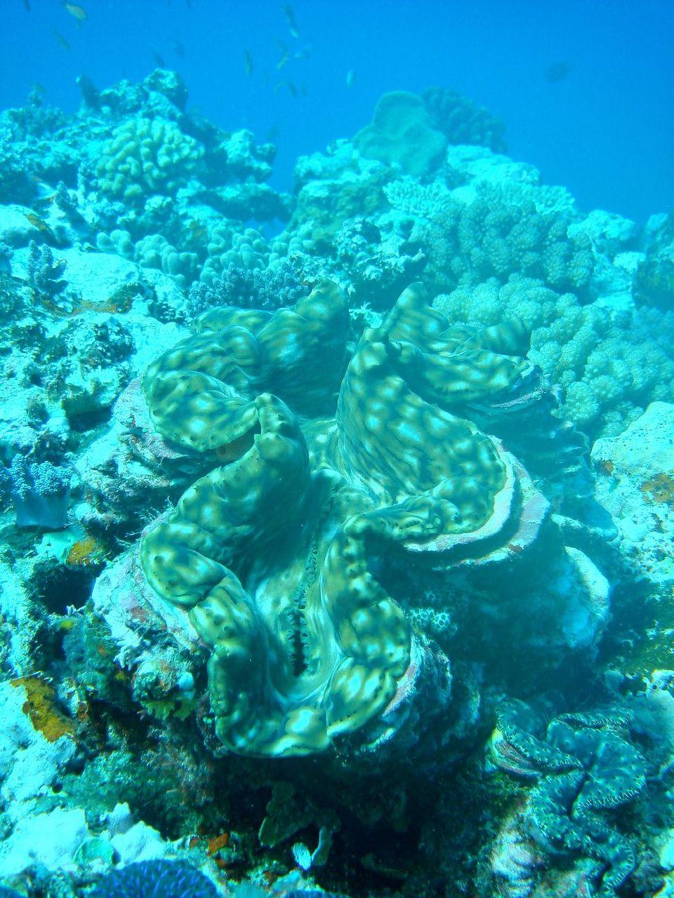 Photo plongee 3 decembre 2007 Poindimie #26