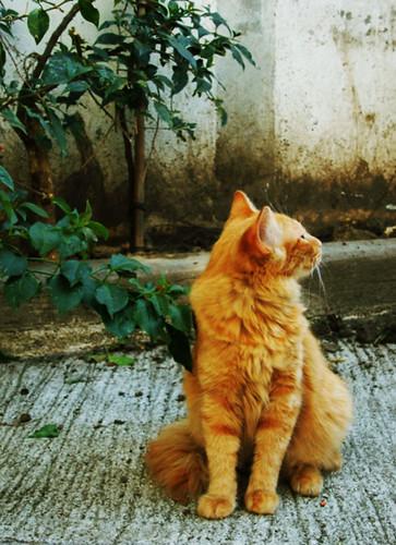 Garfield by Aura Madden
