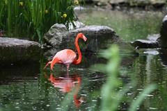 IMG_4821_emmen (Arie van Tilborg) Tags: zoo dieren emmen noorderdierenpark dierentuin mediacollege arievantilborg