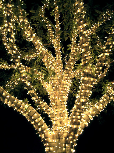 how do i wrap an outdoor deciduous tree with christmas