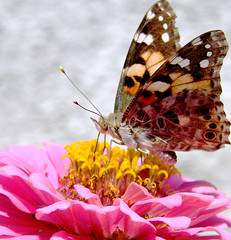 (NeN22) Tags: flower butterfly explore naturesfinest fpc perfectangle impressedbeauty excapture