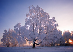 December Trees (Krogen) Tags: winter tree norway landscape norge vinter norwegen noruega scandinavia akershus desember gardermoen romerike krogen landskap trr noorwegen noreg ullensaker skandinavia naturesfinest blueribbonwinner olympusc7070 platinumphoto