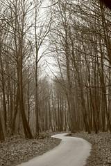 fonte ontanese (sga77) Tags: road trees italy tree sepia foglie alberi forest strada curve leafs inverno pioggia bosco seppia naturesfinest lariano diamondclassphotographer flickrdiamond ontanese fonteontanese