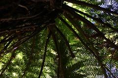 Canopy (Not Charming) Tags: tassie molecreek christmas2007 marakoopacaves