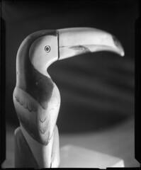 toucan (still life #1)