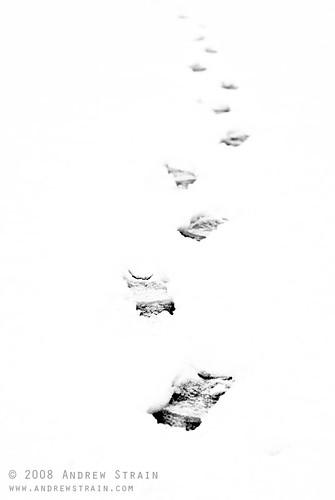 20080129_snowday_3945