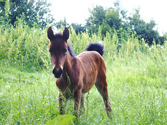Colt /  (Miss_Smile) Tags: horse spring fresh 2008 colt greengrass foal 21march wildnature villageworld