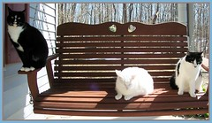 Swinging into Spring (Gail S) Tags: cat spooky tuxedo porchswing thepuss