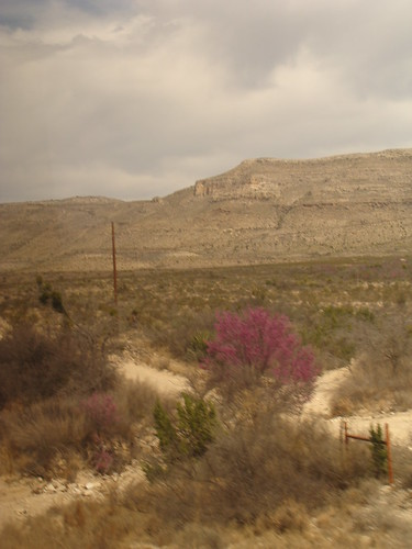 A rare splash of colour in the desert