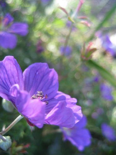 small and purple
