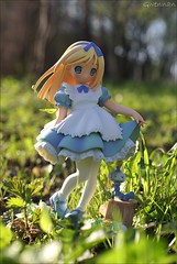 In Wonderland (gwennan) Tags: light anime color cute green nature colors japan closeup toy spring alice figure alter figures pvc aliceinwonderland jfigure happinet popwonderland