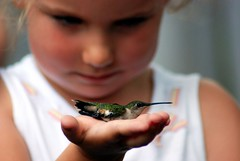 In the eyes of a child (tammyjq41) Tags: nikon littlegirl tjs blueribbonwinner supershot tjd d80 hummingbirdfestival mywinners anawesomeshot impressedbeauty superbmasterpiece diamondclassphotographer flickrdiamond gaithersplantation coveningtonga