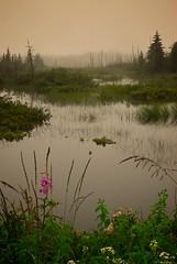 Encore un jour de pluie (Rock Arsenault) Tags: platinumphoto theperfectphotographer