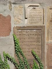 Mauer mit Eidechse (1elf12) Tags: grabsteine tombstone germany deutschland worms heiligersand jüdischerfriedhof mauer wall eidechse cemetary jew