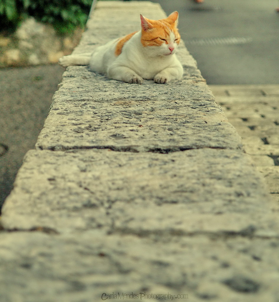 an orange cat :)