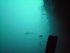 PICT0032 (JoseQ) Tags: blue mar hole great tiburones buceo caribe submarinismo tiburón