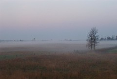 Misty Morning, Carp, Ontario (Tony Lea) Tags: morning autumn mist ontario canada fall field misty fog yard dawn back backyard cloudy farm ottawa tony pasture dew monet lea anthony carp impression impressionist impressionists tonylea anthonylea