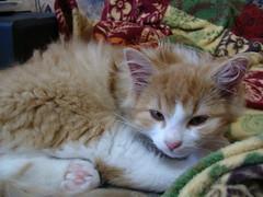 What?!!!! (dora_marie) Tags: pet cats baby pets cute animal animals cat kitten chat nap sweet kitty siesta animaux bb sieste bestofcats impressedbeauty boc1007