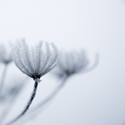 Coldness | Flickr - Photo Sharing!