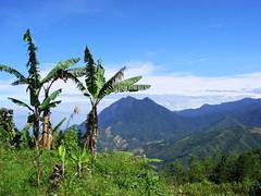 Mount Kinabalu Part III (Ibnu Yusuf) Tags: malaysia mountkinabalu sabah h5 naturesfinest bananatrees gunungkinabalu abigfave pekannabalu superbmasterpiece diamondclassphotographer flickrdiamond ibnuyusuf adikgunungkinabalu