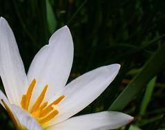 Don't Worry ([Jongky]) Tags: white flower indonesia whiteflower jakarta worried worry bunga wildflower putih dontworry tangerang flickrstar bungaputih abigfave picturepages freenature bloomingbeauty flickrheaven kuatir khawatir