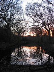 When darkness falls... (photosan0) Tags: trees sunset reflection netherlands zeeland oostkapelle treesubject manteling buitenplaatsberkenbosch