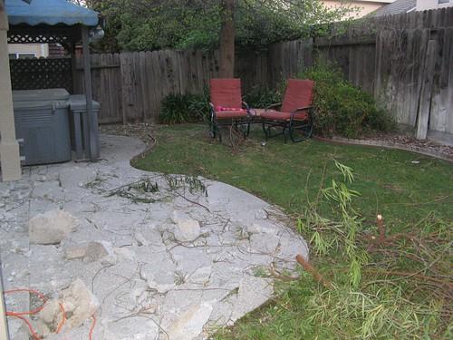 backyard 005