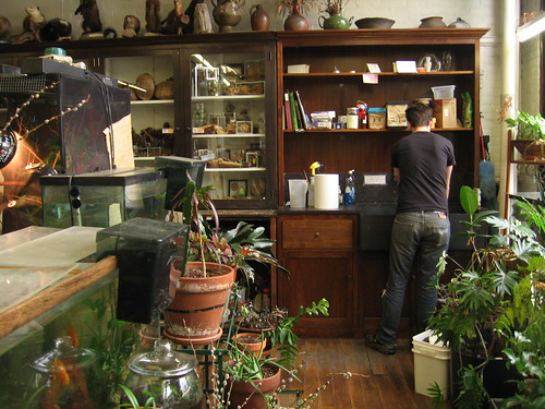 nature lab, shelves