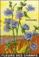 fleurs des champs 10