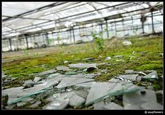 Broken Fragments (Soupflower) Tags: oktober abandoned broken glass photography austria tirol sterreich moss october explorer nursery greenhouse urbanexploration 18200 tyrol moos 2007 verlassen grtnerei urbex scherben ze