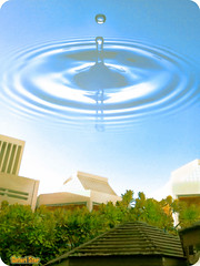 Rain (qatari star) Tags: blue trees tree green university bond doha qatar