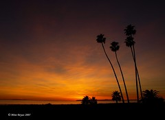 Another Laguna Beach Sunset.... (Mine Beyaz) Tags: ocean california sunset orange beach palm palmiye lagunabeach gunbatimi 10faves 5photosaday turuncu 35faves 25faves platinumphoto aplusphoto excapture naturessilhouettes theperfectphotographer minebeyaz
