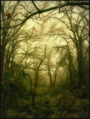 Fog In A Wild Forest. (deepintheforestcat) Tags: nature fog forest landscape spooky tropical wilderness atmospheric eyecandy hypnotic naturesfinest fogandrain flickrbest citrit excellentphotographerawards overtheexcellence enchantedforestsoftheworld