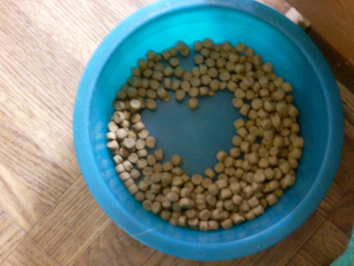 Resultado de imagen de Pigwidgeon11 Heart in Dog Food