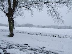 Surrey Snow #11