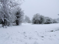 Surrey Snow #4