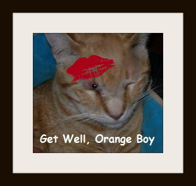 Please get well Orange Boy