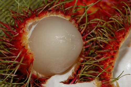 Hairy Red Fruit 112