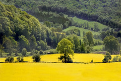Landscape in Green and Yellow (wentloog) Tags: uk tree green field yellow wales canon landscape eos interestingness britain country cardiff seed explore valley oil monmouth 5d agriculture wfc gwent tinternabbey tintern wye wyevalley riverwye firstquality canoneos5d explored ef24105f4l wentloog welshflickrcymru stevegarrington
