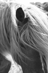 Shy (Marit Hettinga) Tags: horse sweet shy innocence paard haflinger manen onschuldig