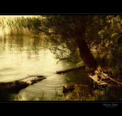 struggle for existence / kzdelem a ltrt (heizer.ildi) Tags: sunset lake tree nature water landscape evening hungary waterfront este termszet balaton fa t tj tjkp digitalcameraclub vz vzpart canonsx10