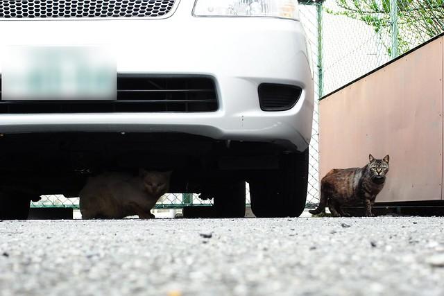 Today's Cat@2011-05-13