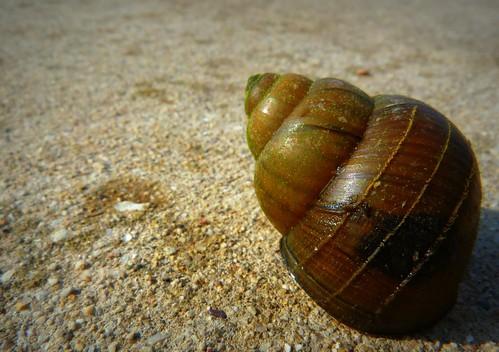 city shell