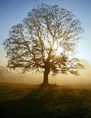 Tree in the Mist - Westonbirt (-terry-) Tags: mist tree sunrise cotswolds westonbirt aboretum naturesfinest nationalaboretum flickrchallengewinner 15challengeswinner