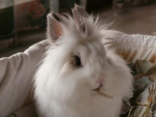 such a pretty bunny!