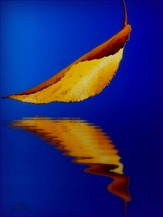 Melancholy....... (Bea Kotecka *Come back :) *) Tags: blue autumn abstract art bravo colours olympus nophotoshop soe impression artcafe hugsandkisses sp350 supershot magicdonkey 50faves flickrsbest 25faves golddragon mywinners impressedbeauty aplusphoto goldenphotographer diamondclassphotographer megashot superhearts lunarvillage onlythebestare thefinalcrown vividmasters artlegacy excapture thegoldenmermaid betterthangood theperfectphotographer beakotecka goldstaraward thebestvivid tup2 world100f mastersoflifegallery alemdagqualityonlyclub 100commentgroup amongstthethorns globalworldawards newworldglobalaward beakoteckaphotography artcafedomidoexhibitionscomein