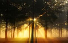 Approaching... (-Teddy) Tags: fog forest ga 85mm robins warner 5d rays sunrays rayoflight exodusphoto