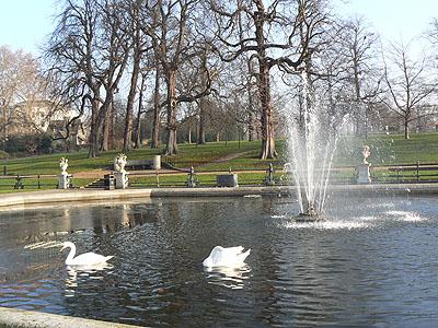 cygnes sur le bassin de Hyde Park.jpg