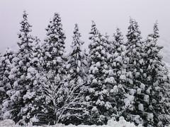 湯沢は大雪