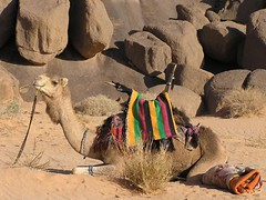 Algerien (ursulazrich) Tags: africa sahara expedition algeria desert camel afrika caravan algerie nomads kamel afrique argelia karawane algerien meharee